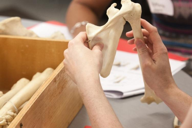 Hands-on learning at the 2014 Functional Anatomy Boot-Camp.